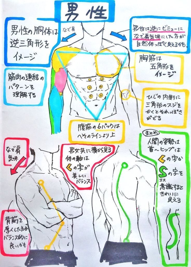 draw torso and muscles ChScTAbU4AAKb47.jpg 1,024×1,436 pixels