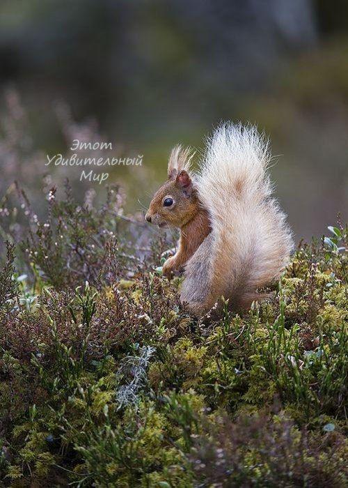 Красивые фотографии природы (с изображениями) | Самые ...