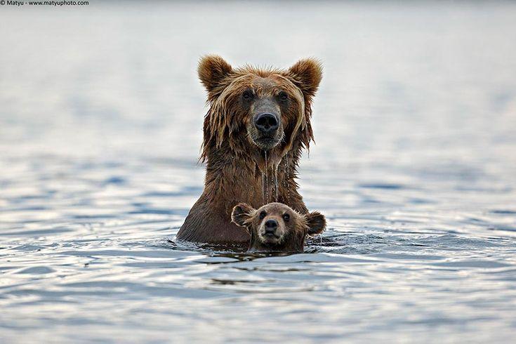 Эти животные научат быть хорошими родителями