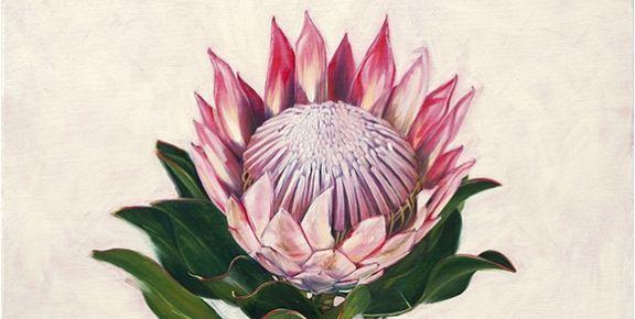 Still Life with Protea (Emma Wyngaard)