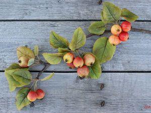 Создаем веточку яблони из полимерной глины | Ярмарка Мастеров - ручная работа, handmade