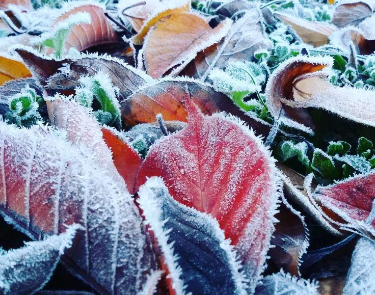 Winter is coming! L'inverno sta arrivando! Also in #ballarat  #visitballarat #visitvictoria #autumn #loveaustralia #winterpic  #australiacountryside #inverno #nature #leaves #winterleaves #australiacolors #wintercolors #frozenleaves #australiagram #australiagram_vic