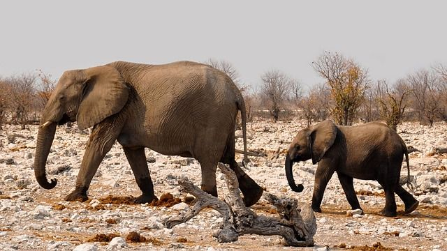 elephant-safari-namibia