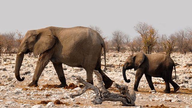 elephant-safari-namibia