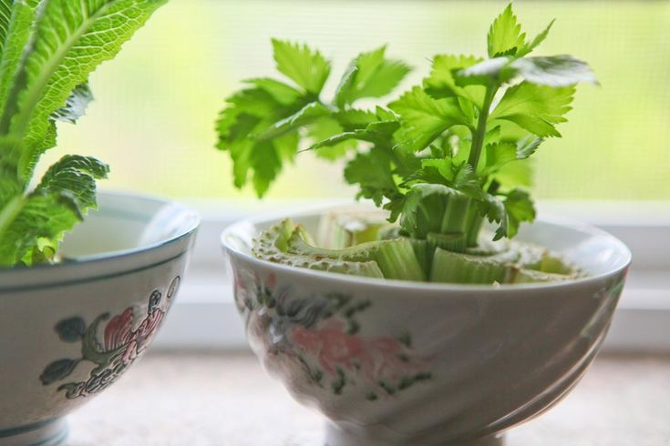 15 Neat Gardening Hacks You Need in Your Life – regrow celery (keep the bottom)