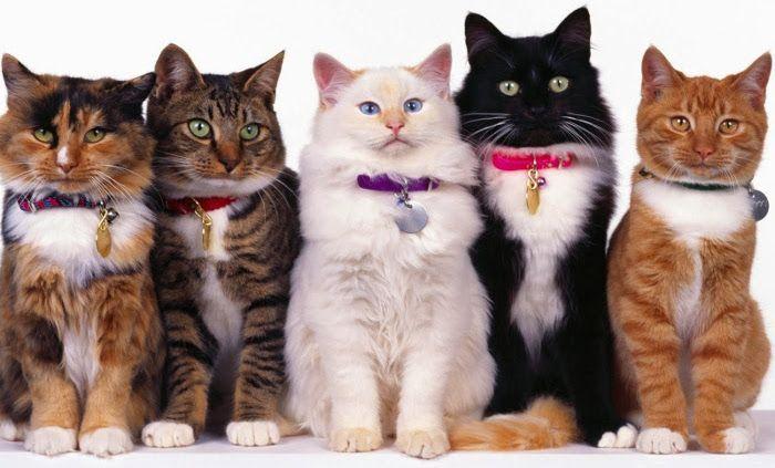Resultado de imagem para gatos