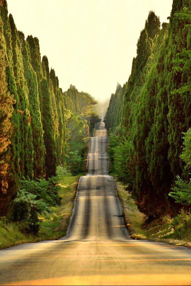 Sunset in Bolgheri, Italy