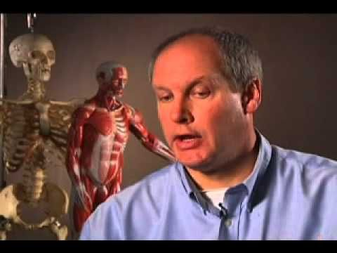 ▶ The Skeletal and Muscular System - YouTube