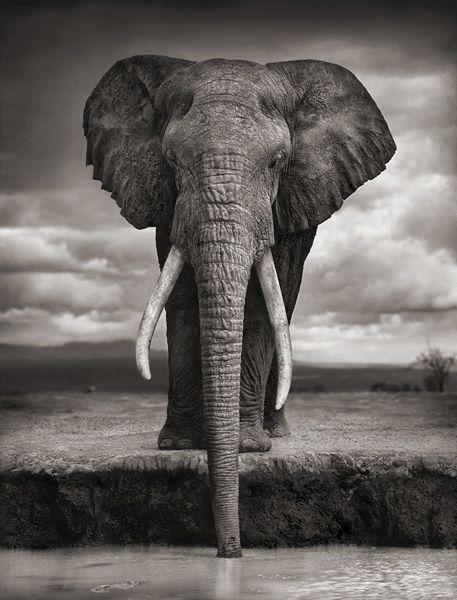 #olifant #fotografie