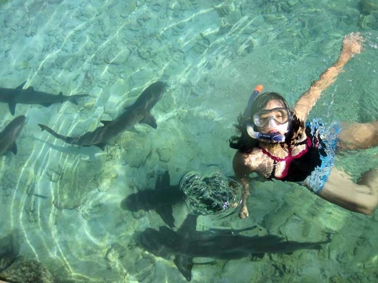 swimming with baby shark - Karimun Jawa, Indonesia
