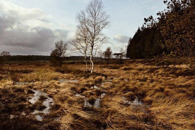 Site where Tollund Man was discovered in Silkeborg, Denmark © Robert Clark