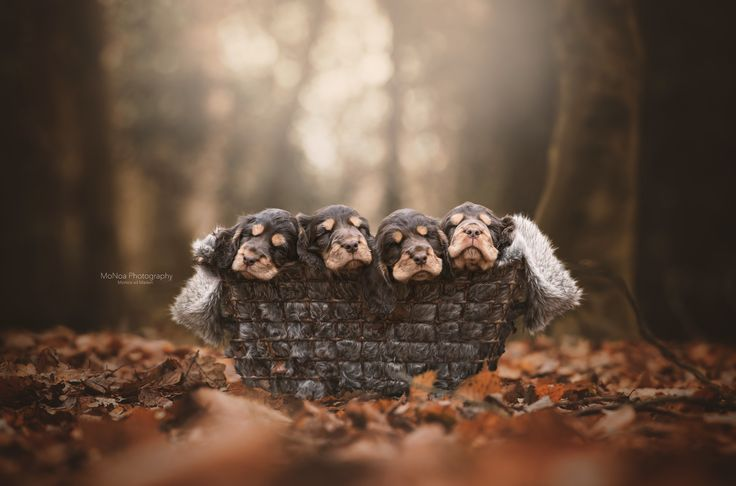 #Puppies #Sweet #Dream #Photography