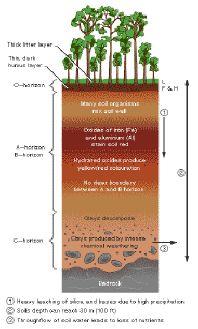 GCSE Ecosystem Tropical Rainforest Revision | Kids Science ...