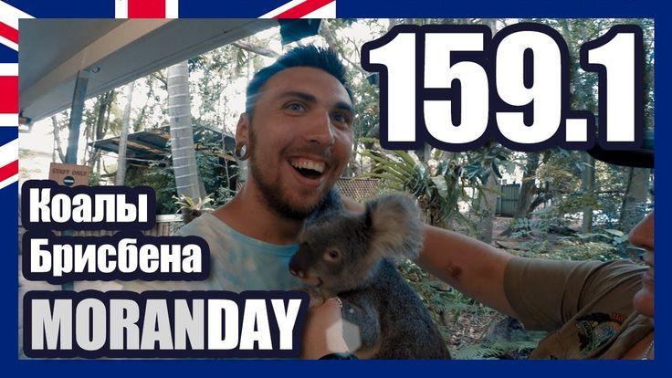 Moran Day 159.1 - Коалы Брисбена (Австралия)
