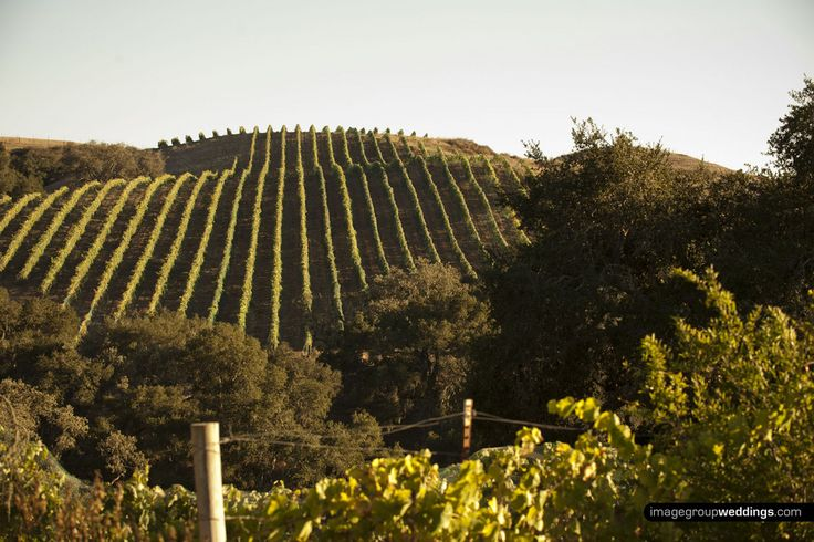Los Olivos' Best Wineries: Attractions in Santa Barbara