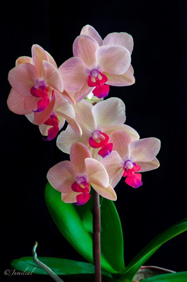 Ramillete de orquídeas by JuMi LeAl, via 500px