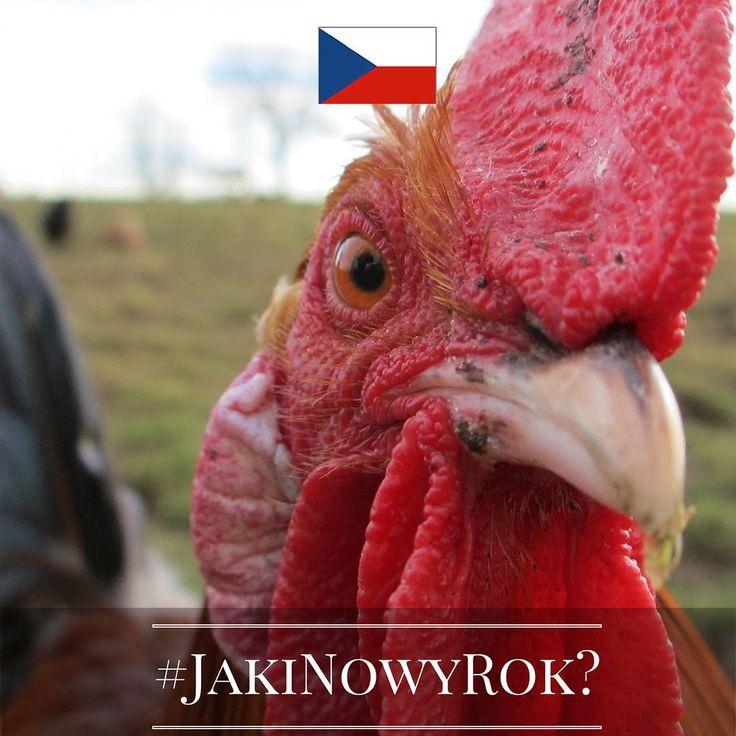 Jaki będzie Nowy Rok? Tego jeszcze nie wiemy, ale znamy ciekawe sylwestrowe i noworoczne zwyczaje europejczyków. Chcecie je poznać? Śledźcie naszą instakampanię każdego dnia, aż do 1 stycznia 2016 r. Wejdźmy w nowy, 2016 rok razem z nadzieją i uśmiechem!  Dzień 3 - Czechy! Czesi są bardzo ostrożni, jeśli chodzi o noworoczne szczęście. To bowiem może ulecieć na skrzydłach, jeśli w pierwszy dzień Nowego Roku na talerzu pojawi się ... drób!  #JakiNowyRok? #KE #UE #Zwyczaje #NowyRok #Sylwester…