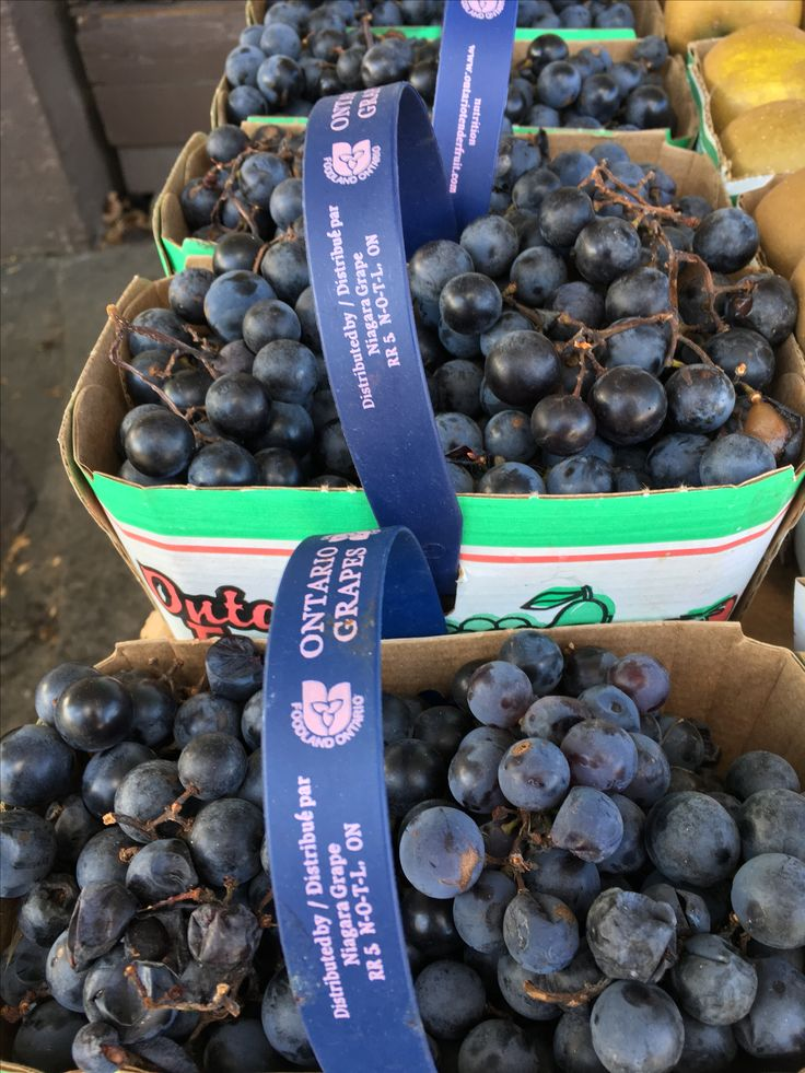 Ontario concord grapes! With that tart, unmistakable ultra grape taste! Make grape jelly at home with these! #GrapeStuff