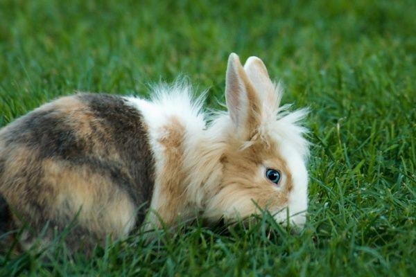 Bernice Muntz is konijnenfluisteraar. Ze schreef al het boek High Five Met Je Konijn en begint nu ook een konijnenschool. Je kan volgens Bernice namelijk veel ...