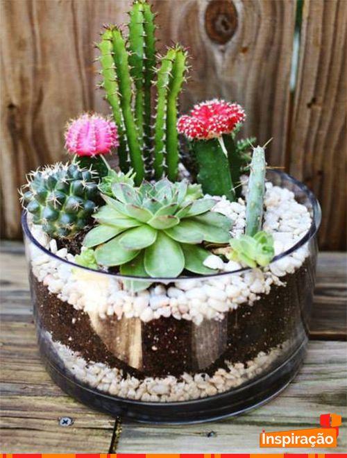mini jardim de vidro : mini jardim de vidro:muito charme. Mini jardim de cactos e suculentas. #Decoração #Jardim