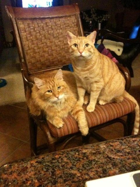 Sam and Edward.: Cat, Sweetie, Edward, I, Tabby