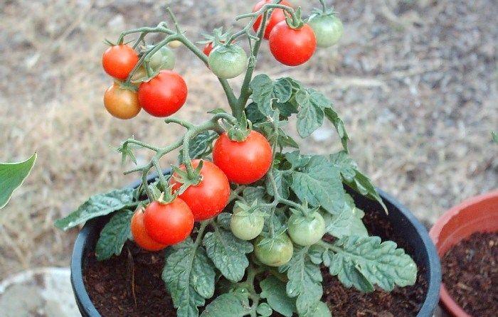 ¿Qué vegetales me conviene plantar en mi jardín?