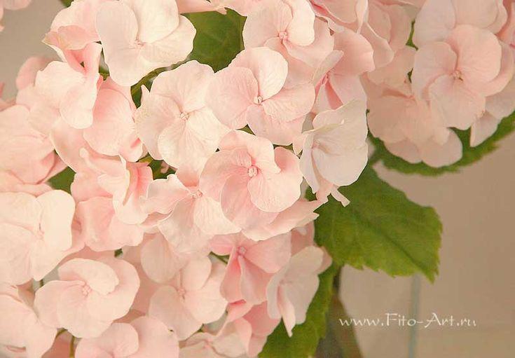Композиции : Розовая гортензия. Керамическая флористика - Fito Art