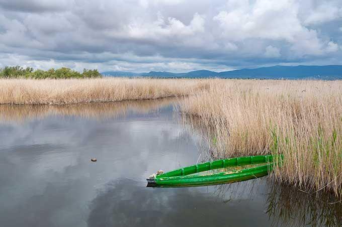 Los 10 mejores parques naturales de España |Parque Nacional de las Tablas de Daimiel, Castilla-La Mancha  Skyscanner