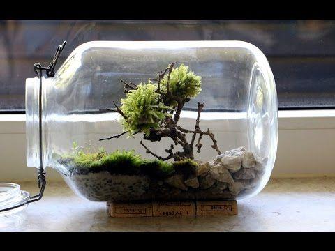 die besten 25 terrarium selber bauen ideen auf pinterest terrarium deko terrarienpflanzen. Black Bedroom Furniture Sets. Home Design Ideas