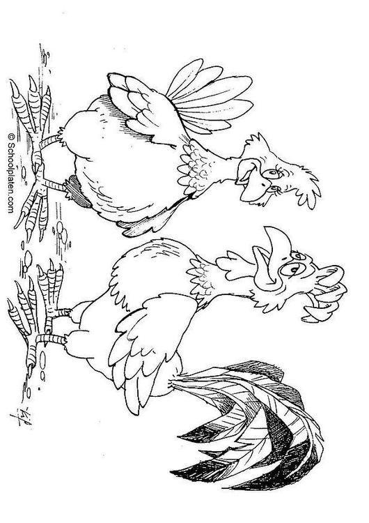 Bilde å fargelegge hane og høne. Barn lærer om hane og høne mens de fargelegger | Bilder til bruk i skole og utdanning - bil 16869.