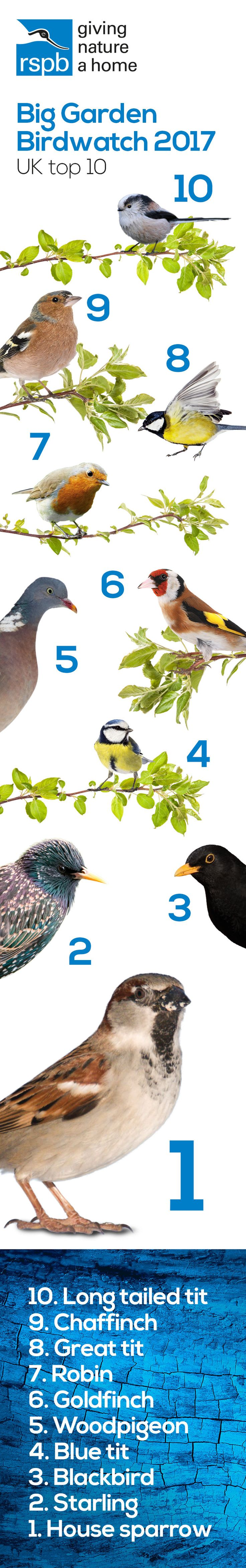 #BigGardenBirdWatch 2017 results are here: Sparrows are top of the tree, Robins are doing well but the blue tit, chaffinch and starling are all struggling. Please keep #GivingNatureAHome in your garden or community