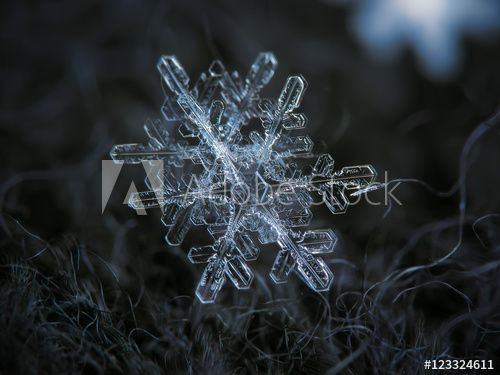 Interesting pair of very similar (but not identical) snowflakes. It seems that they fall and grow in close proximity, and similar air conditions produces similar crystals.