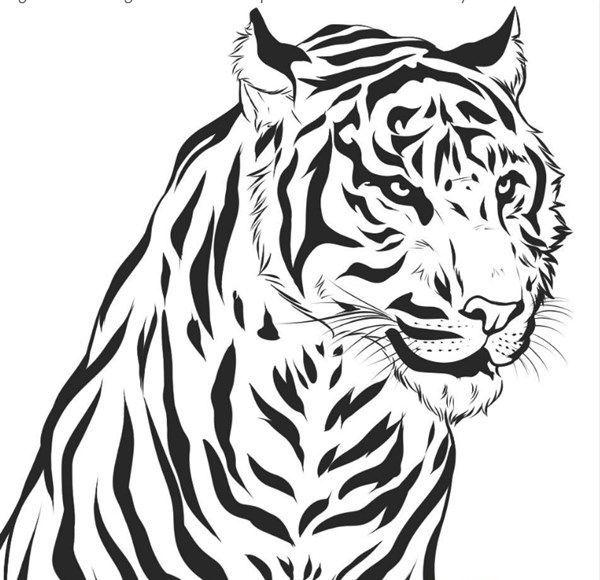 Tigre Blanco Para Colorear Tigre Para Dibujar Tigre Para Colorear Dibujos Realistas