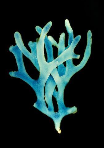Stephanie Valentin, Fathom 5, 2004, sea of life ocean blue coral