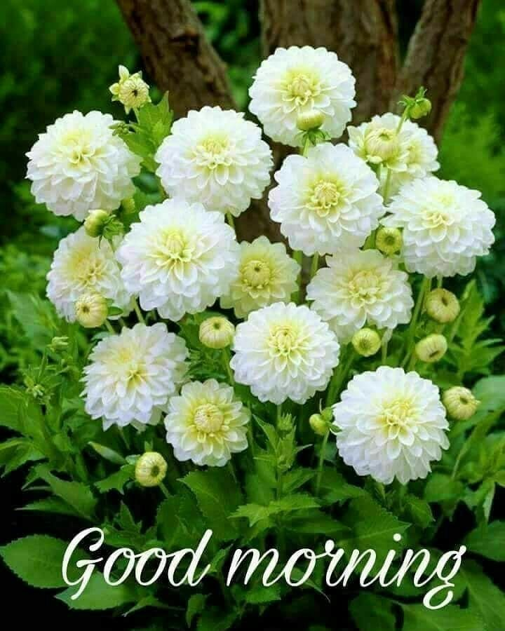 Goodmorning Love Life Instagood Flowers Goodtimes Nature Goodmorningpost Goodmorningpeople Goodmor Good Morning Flowers Planting Flowers Good Morning