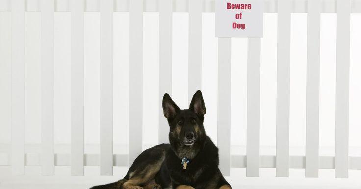"""Las mejores 10 razas de perros para protección. Tomando en cuenta que todas las razas de perros han sido creadas por el humano, en este caso para protección, pastoreo e incluso """"diversión"""" (peleas ilegales de perros), a algunas razas se les ha dado el calificativo de """"agresivo"""". Estas razas pueden ser agresivas como resultado de ..."""