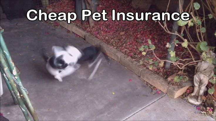the problem with cheap pet insurance