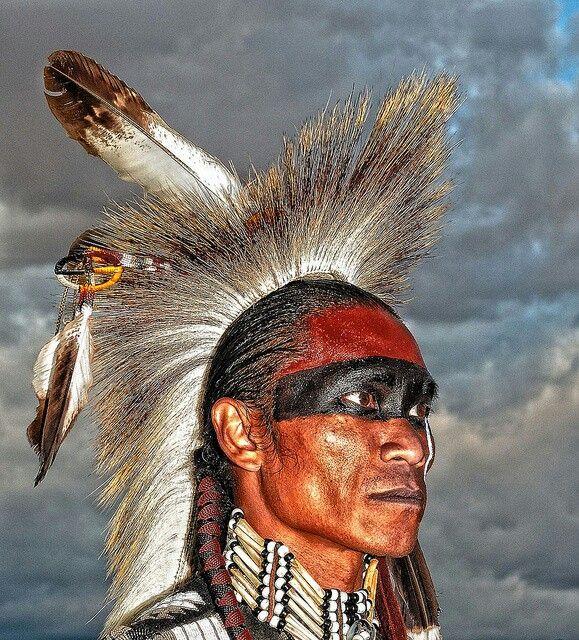 Indiana Native Plants: 839 Melhores Imagens De Native No Pinterest