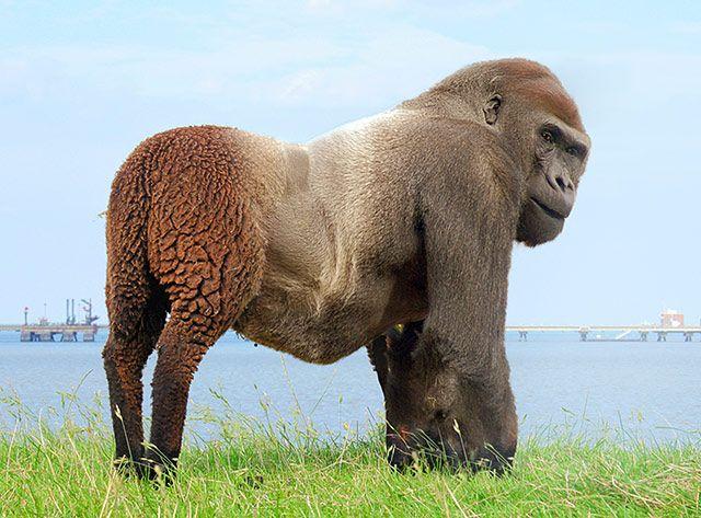 Real Human Animal Hybr...
