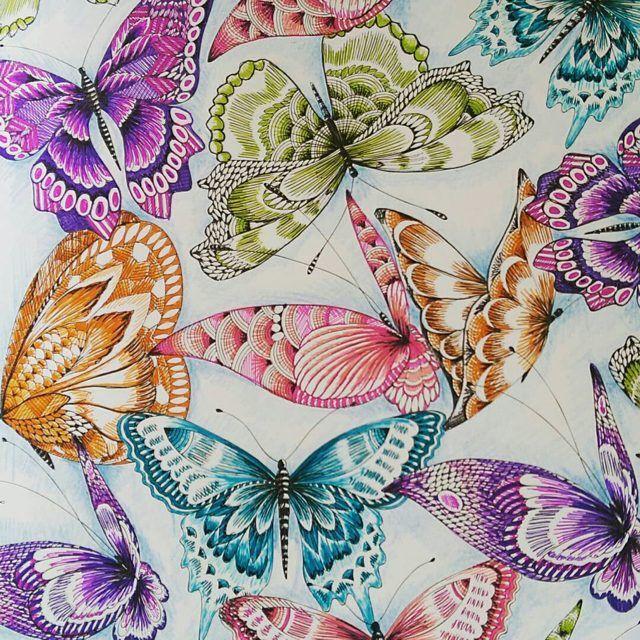 Tropical Wonderland By Millie Marotta Instagram Colouring