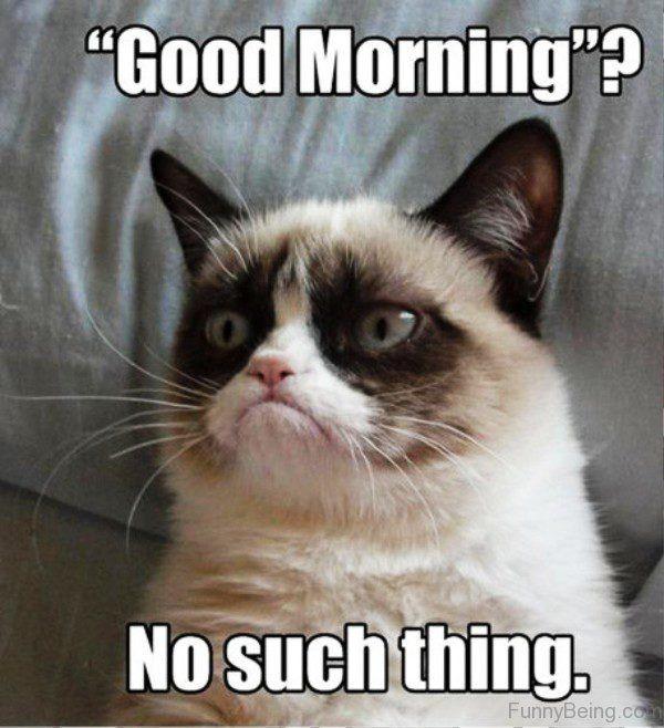 80 Good Morning Memes To Kickstart Your Day Sayingimages Com Grumpy Cat Humor Grumpy Cat Funny Grumpy Cat Memes