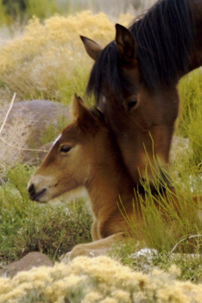 Wild Bay Mare Lovin' Her Baby.