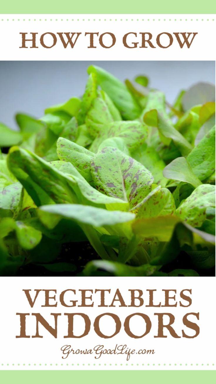 How To Grow An Indoor Garden Video Growing Vegetables 400 x 300