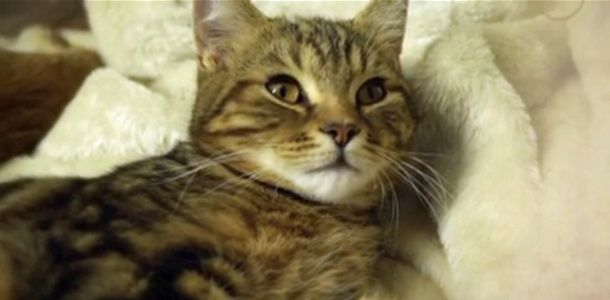 Kissakahvila aukeaa Lontoossa http://www.rantapallo.fi/matkailu/lontoon-odotettu-kissakahvila-aukeaa/