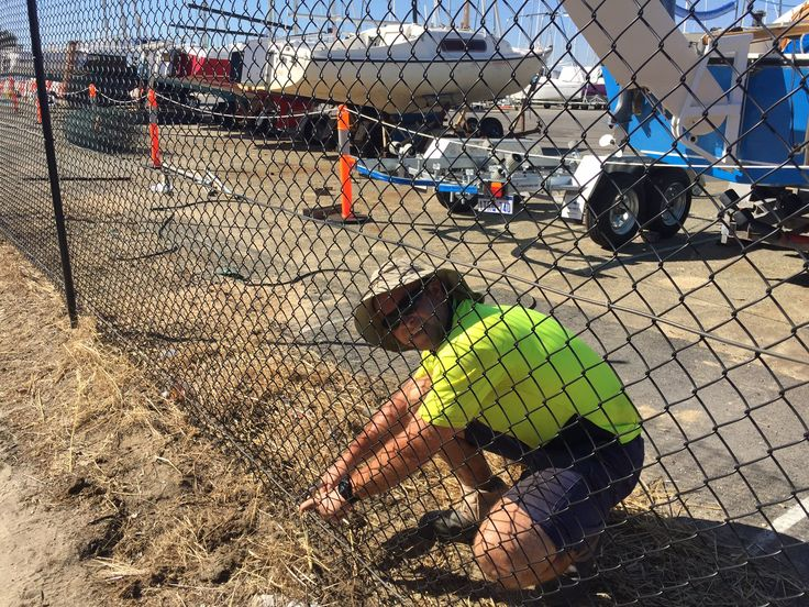 Chain mesh fencing at South Perth Yacht Club - Attaching clips to helicoil, ensuring that chain mesh is secure