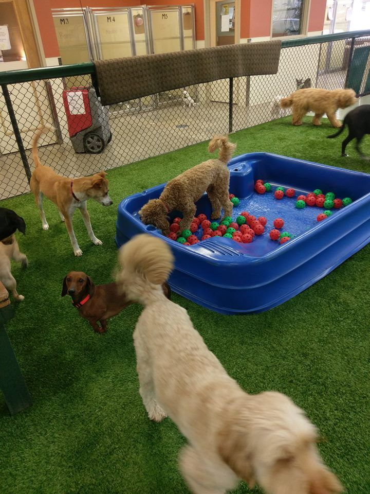 Pin By Joanienleland Worlow On Indoor Activity Park Dog Daycare
