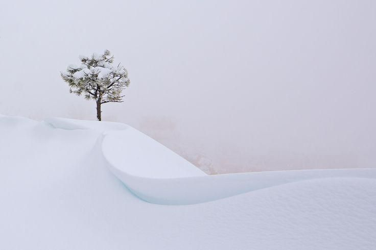 The Snow Tree Photo by Yvonne Baur - 2016 National Geographic Travel Photographer of the Year