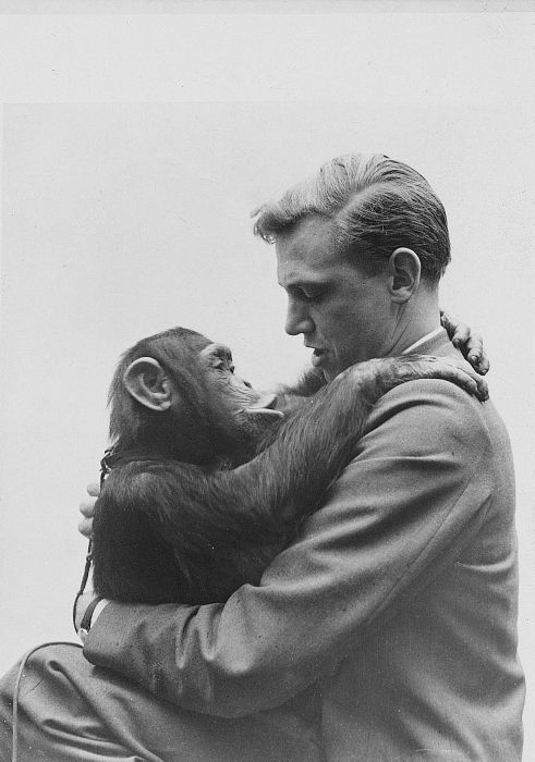 A young Sir David Attenborough | chimp | for the love of animals | nature | connection | friendship | vintage | black & white photography | chimpanzee | beautiful image