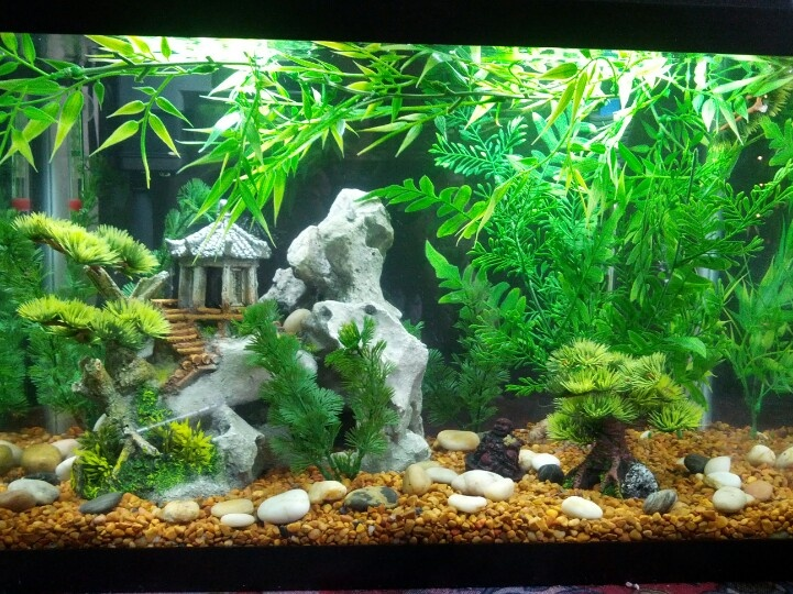 1000 ideas about small fish tanks on pinterest fresh for Fish tank show