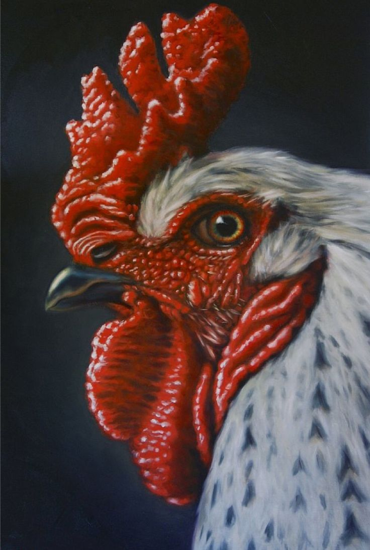 Best 25 Rooster Art Ideas On Pinterest Rooster Painting